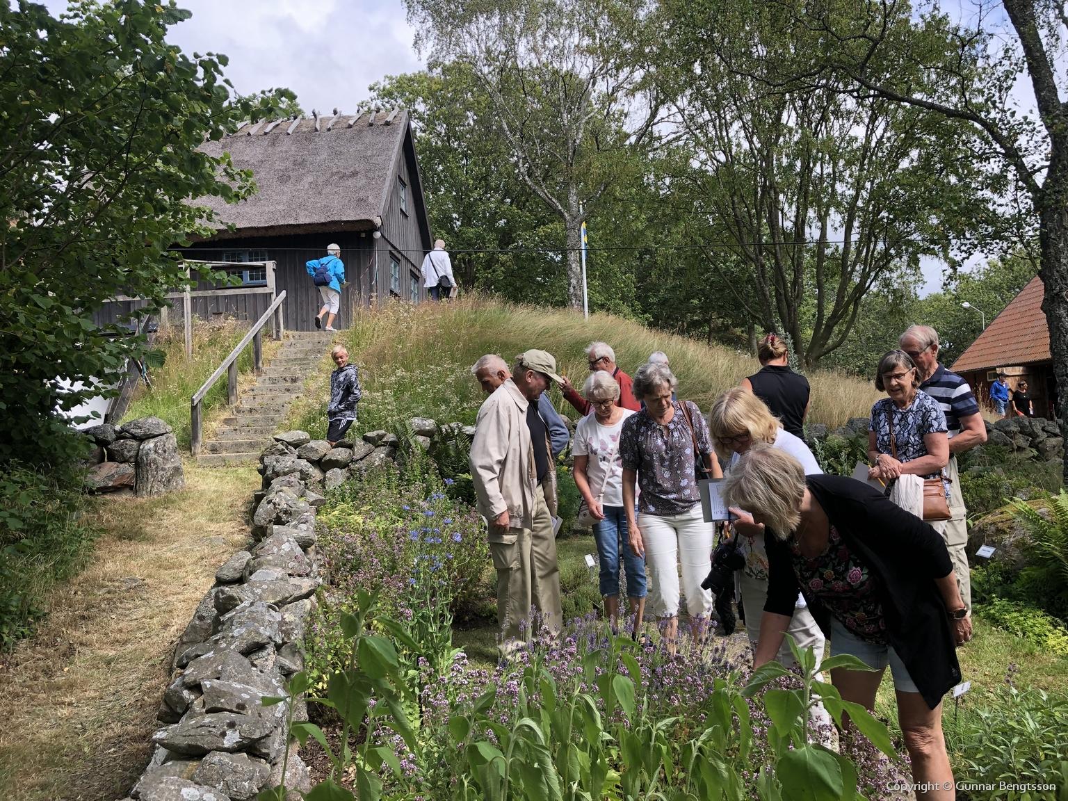 Örtagården intresserade många